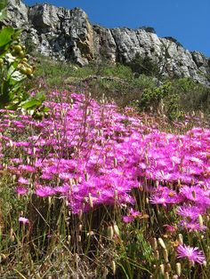lion's head walk. cape town. south africa. by Jose Romeu, via Flickr