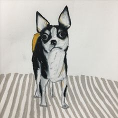 someone's puppy