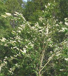 Image result for wild shrub