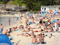 Top 10: Sydney's best picnic spots to make the most of your summer holidays | News Local