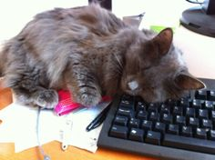 Trying to work while cat sleeps on the ESC key. Problem: Cat too cute to wake it… Bad Cats, Cute Cats And Kittens, Bad Kitty, Sleepy Cat, Cat Sleeping, Funny Pictures, Cute Animals, Hilarious, Cat Naps