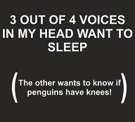 Penguins. Got to giggle...