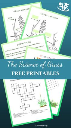 The science of grass crossword, word search, grass anatomy, and fill in the blank chart #kidsactivities #STEM #scienceforlittlekids #handsonlearning #laughingkidslearn #kidminds #grassscience Activities For 5 Year Olds, Science Activities For Kids, Hands On Activities, Science Lessons, Science Experiments, Stem Learning, Hands On Learning, Curriculum, Homeschool