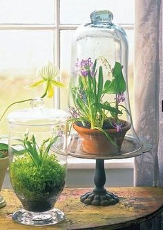 terrariums with lily of the valley