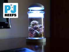 PJ reef Mini Reef Kickstarter #aquarium #saltwater