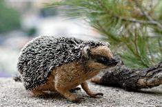 Needle Felted Wool Animals- Hedgehog   by daria.lvovsky