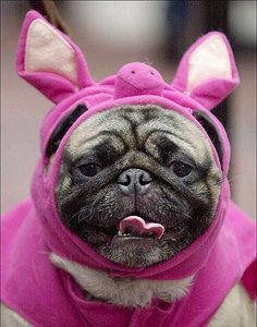 How Pets make us Happy. #Dog, #Pets, #Health