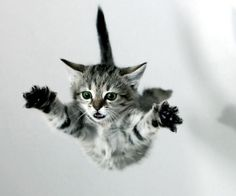 Kitten falling. OMG, what an expression!