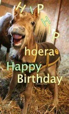 Happy Birthday Birthday Fun, Birthday Cards, Inspirational Horse Quotes, Birthday Wishes Greetings, Happy Birthday Pictures, Happy Animals, Congratulations, Birthdays, Horses