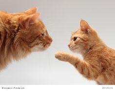 Nicht nur Katzenmütter können zur Erziehung beitragen. Du schaffst das auch! http://blib.it/2j