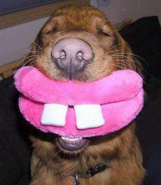 Funny pictures of animals | Смешные фотографии с животными