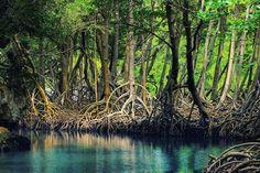 Parco nazionale Los Haitises organizzazione tour in repubblica dominicana & haiti www.santodomingoblu.com whatapp: 0018496323638