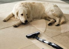 We've rounded up some techniques for managing dog and cat shedding in your home, including using a pet vacuum and keeping up with regular grooming.