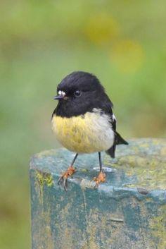 Three Little Birds Tattoo Meaning #twitter