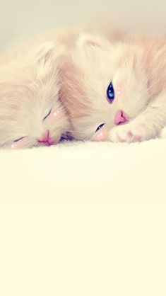 Sleeping Cute Kittens Lockscreen #iPhone #5s #wallpaper