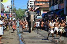 Elephant Race by Dheeraj ED on 500px
