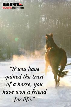 """If you have gained the trust of a horse, you have won a friend for life. Horse Love Quotes, Horse Poems, Inspirational Horse Quotes, Horse Riding Quotes, Cowboy Quotes, Cowgirl Quote, Horse Sayings, Funny Horses, Cute Horses"