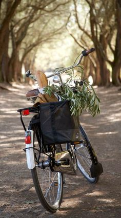 Bicycle in France. French bread and olive branches...whose heart is she off to mend? What simple supper will the shepherdress bring along with Gods word to shine true?