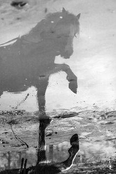 Reflection by Antoine Bassaler