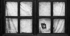Đáng yêu khoảnh khắc thú cưng 'suy tư' bên cửa sổ | Depplus.vn