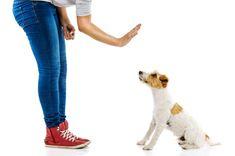 Povely pre psa. Tu nájdete všetky, ktoré potrebujete poznať