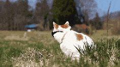 cat animals animal shironeko oh shiro stop that