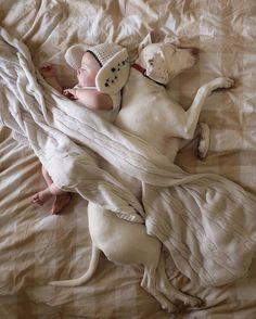 Cute Rescue Puppy Sleeping with a 8-Month-Old Baby – Fubiz Media