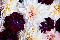 Varied Dahlias 1 | Photography by Brittany Ambridge