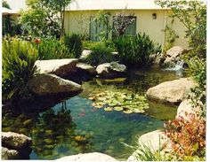 our beautiful ponds and wintering fish outdoor ideas