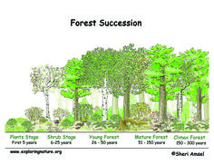 Ecological succession teks 710c diagram does use out dated term image result for forest succession over time six stages publicscrutiny Choice Image