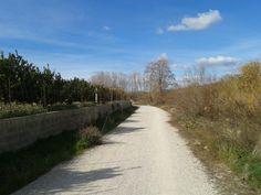 La huerta y el río separadas por el camino en el Parque Natural del Turia