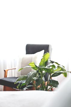 The Peace Lily   The most common issue for these guys is over watering. They vary in how much water they need so the best way to tell is touch the soil once a week and only water if it's dry. They tolerate under-watering more than over-watering. They prefer low to medium light.