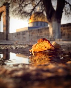 Dome of the rock Architecture Collage, Islamic Architecture, Islamic World, Islamic Art, Islamic Sites, Palestine Art, Imam Hussain Wallpapers, Boxing Posters, Fairy Wallpaper