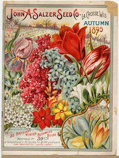 Коллекция картинок: Цветы,фрукты, овощи в антикварной рекламе, часть 5