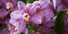 Flora Fun Facts: Orchids