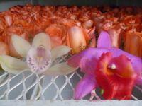Exhorto a producir orquideas preservadas de color Natural,por Liofilización