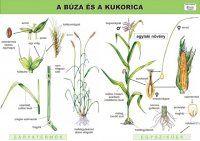 Nature Journal, Gras, Bookmarks, Homeschool, Environment, Science, Teaching, Education, Plants