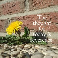 DAY 15 Feb. 13: The thought for today is REVERENCE. Reverence for all life is fundamental to Ahimsa; it is the ultimate rationale for nonviolence - for how can one willingly do harm to that for whi...