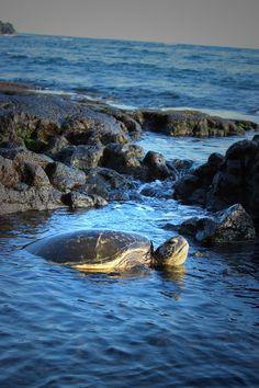 Visited by the Hawaiian Sea Turtle (Honu).
