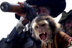 バルボッサの猿 - Google 検索