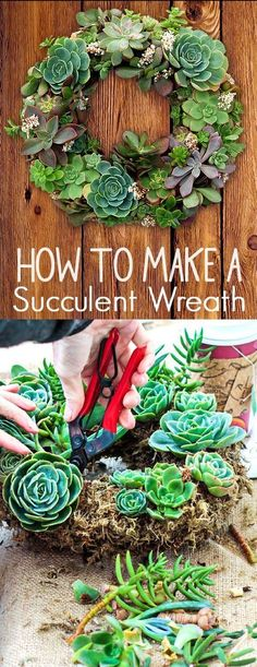 How to Create a Succulent Garden Wreath (Diy Garden Projects) Succulent Planter Diy, Succulent Wreath, Succulent Gardening, Cacti And Succulents, Planting Succulents, Container Gardening, Organic Gardening, Succulent Garden Ideas, Moss Wreath