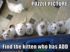 Find the kitten who has ADD. Pinned by SOS Inc. Resources.  Follow all our boards at http://Pinterest.com/sostherapy for therapy resources.