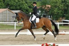 Excellent mare in 2012 over 30 placing and wins in PSG, Inter I+II and Grand Pix.    Contact us for more info. miriam@horsesportconsulting.com