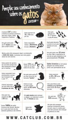 Curiosidades sobre os gatos.