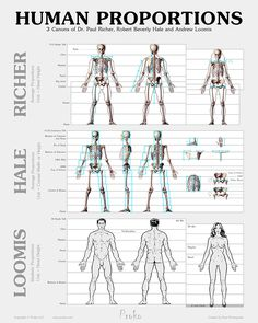 Human Figure Proportions Poster - Richer, Hale and Loomis. http://www.proko.com/human-figure-proportions-poster/