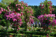 Een rozentuin met Petunias Riddersporen en rozen rondom de glazen bol
