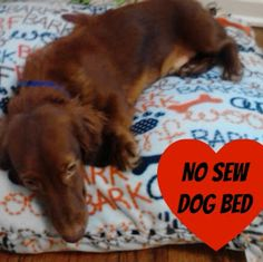 No Sew Dog Bed! DIY in just a couple of hours - it's my pup's favorite bed!