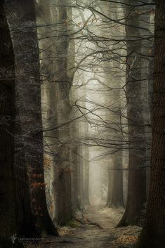 Haunting forest