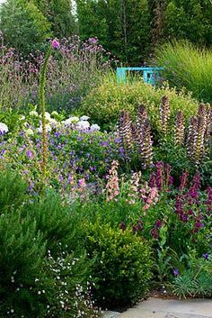 BORDER WITH PENSTEMON AND ACANTHUS MOLLIS