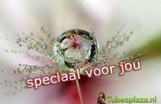 Speciaal Voor Jou 8 - Speciaal Voor Jou - Galerij - Tubesplaza.nl
